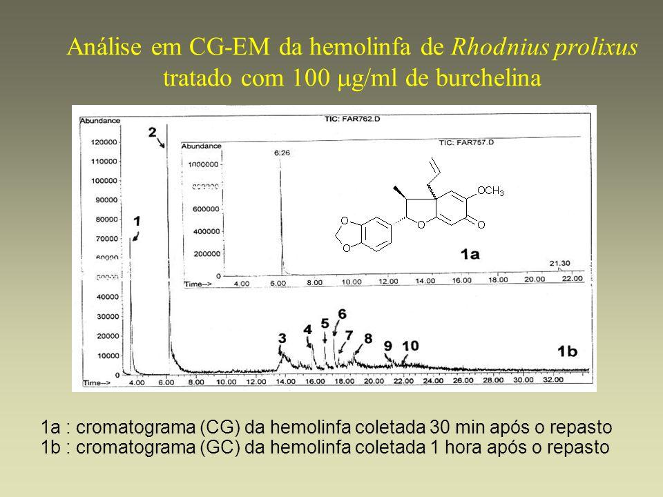 Análise em CG-EM da hemolinfa de Rhodnius prolixus tratado com 100 mg/ml de burchelina