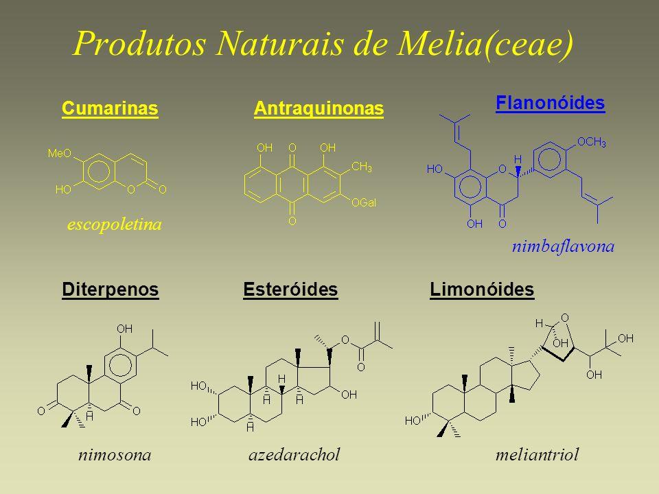 Produtos Naturais de Melia(ceae)