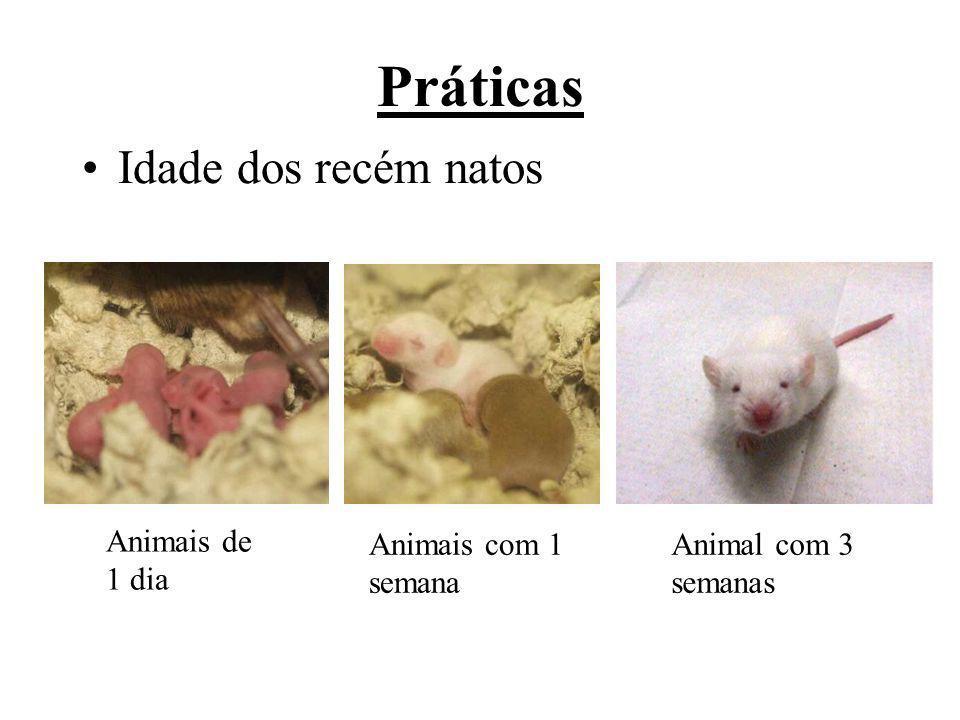 Práticas Idade dos recém natos Animais de 1 dia Animais com 1 semana