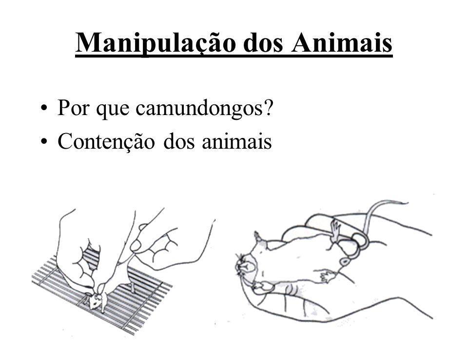 Manipulação dos Animais