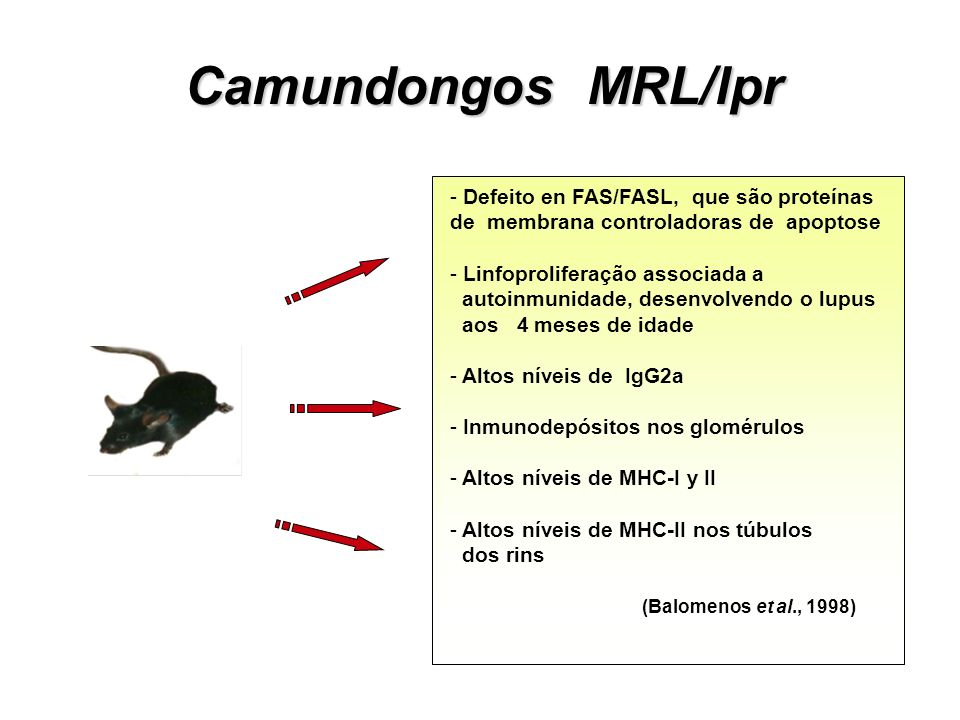 Camundongos MRL/lpr Defeito en FAS/FASL, que são proteínas de membrana controladoras de apoptose.
