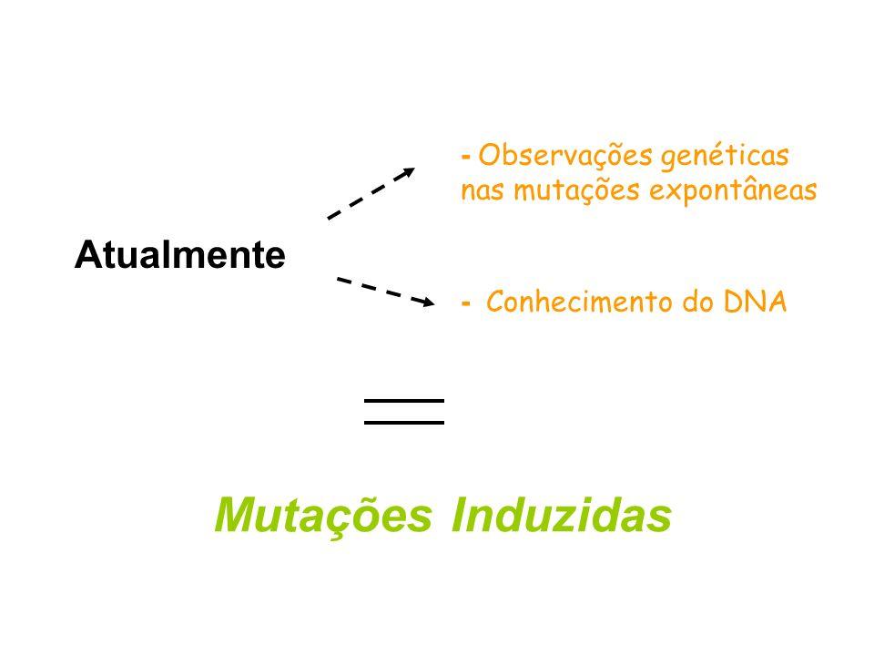 Mutações Induzidas Atualmente - Observações genéticas