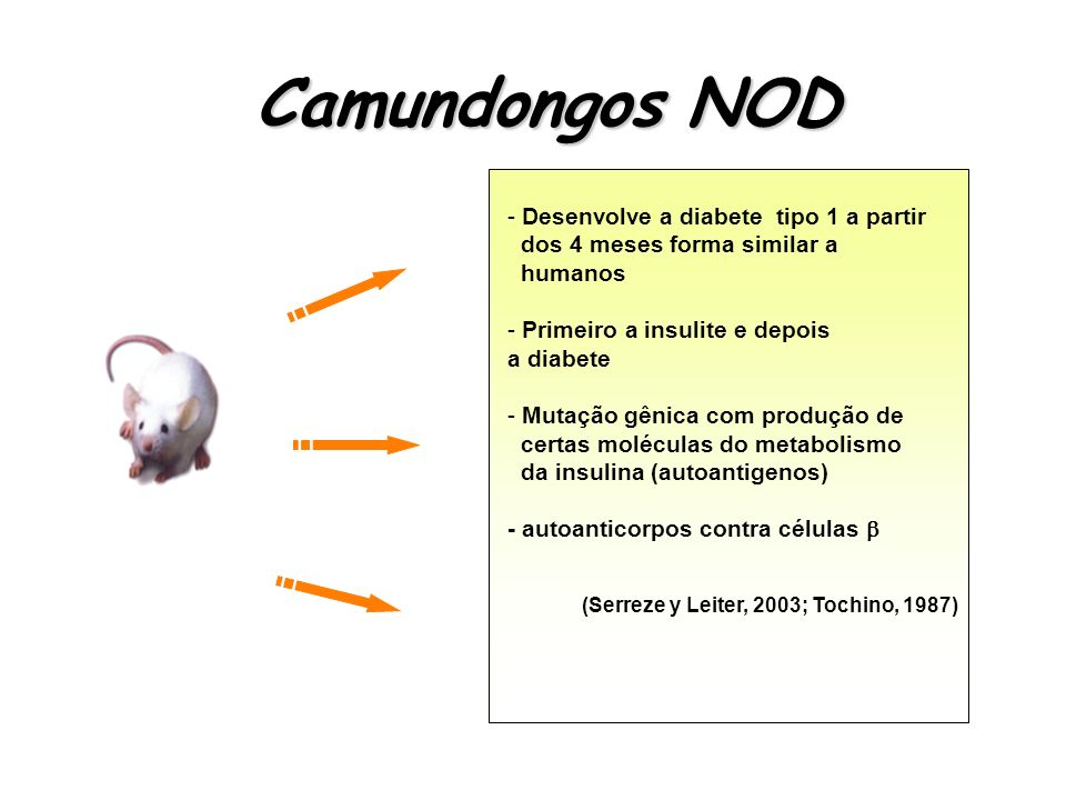 Camundongos NOD Desenvolve a diabete tipo 1 a partir