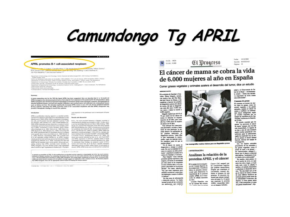Camundongo Tg APRIL