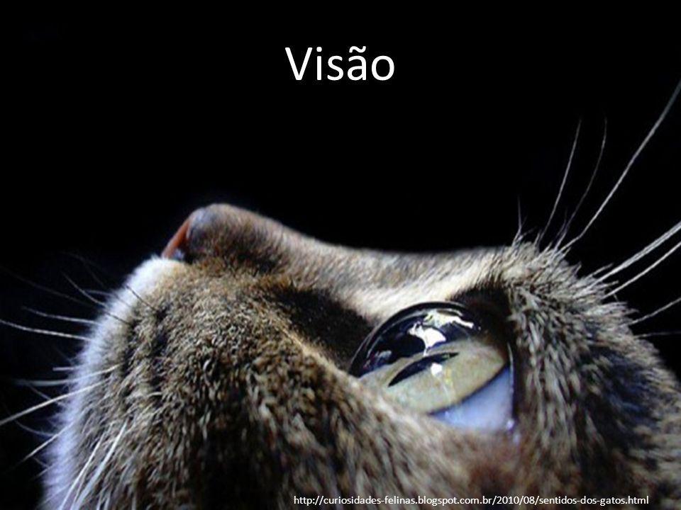 Visão http://curiosidades-felinas.blogspot.com.br/2010/08/sentidos-dos-gatos.html