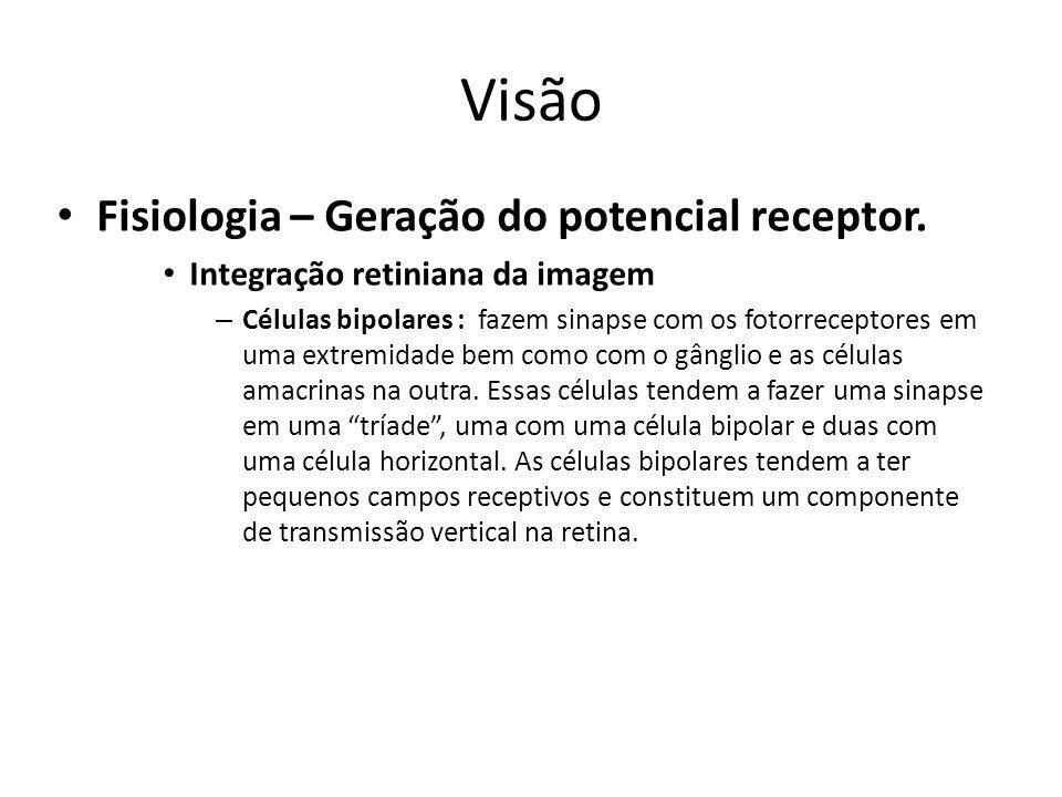 Visão Fisiologia – Geração do potencial receptor.