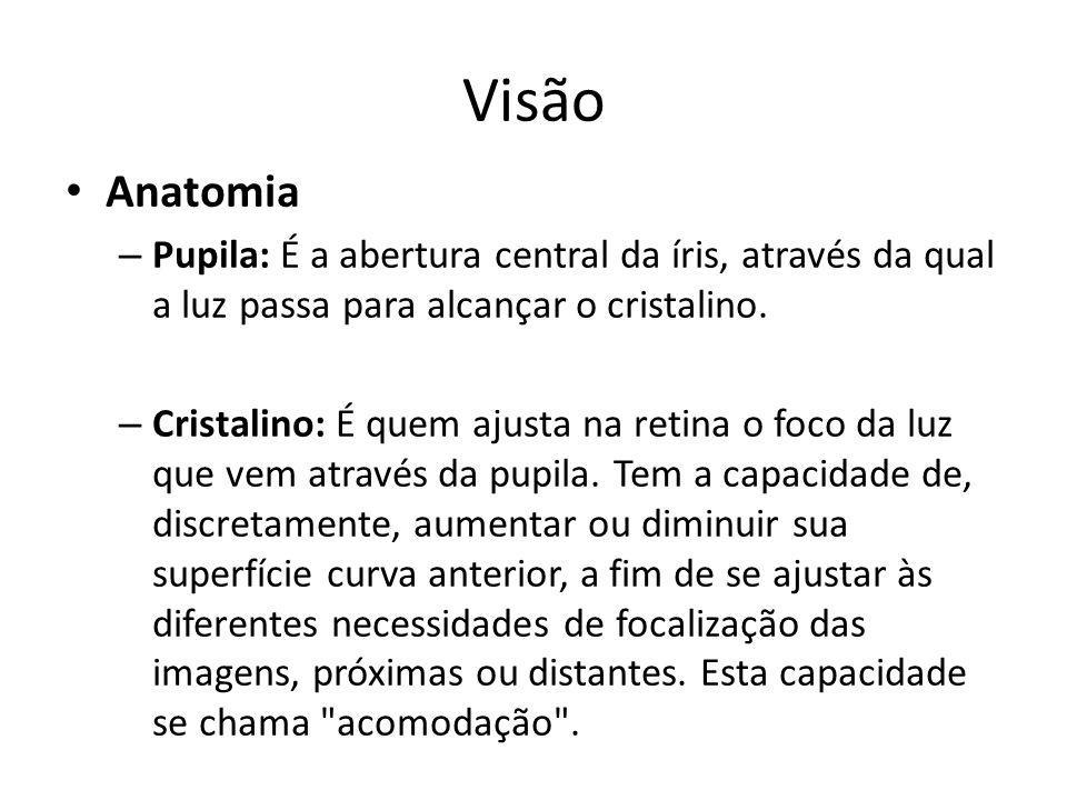 VisãoAnatomia. Pupila: É a abertura central da íris, através da qual a luz passa para alcançar o cristalino.