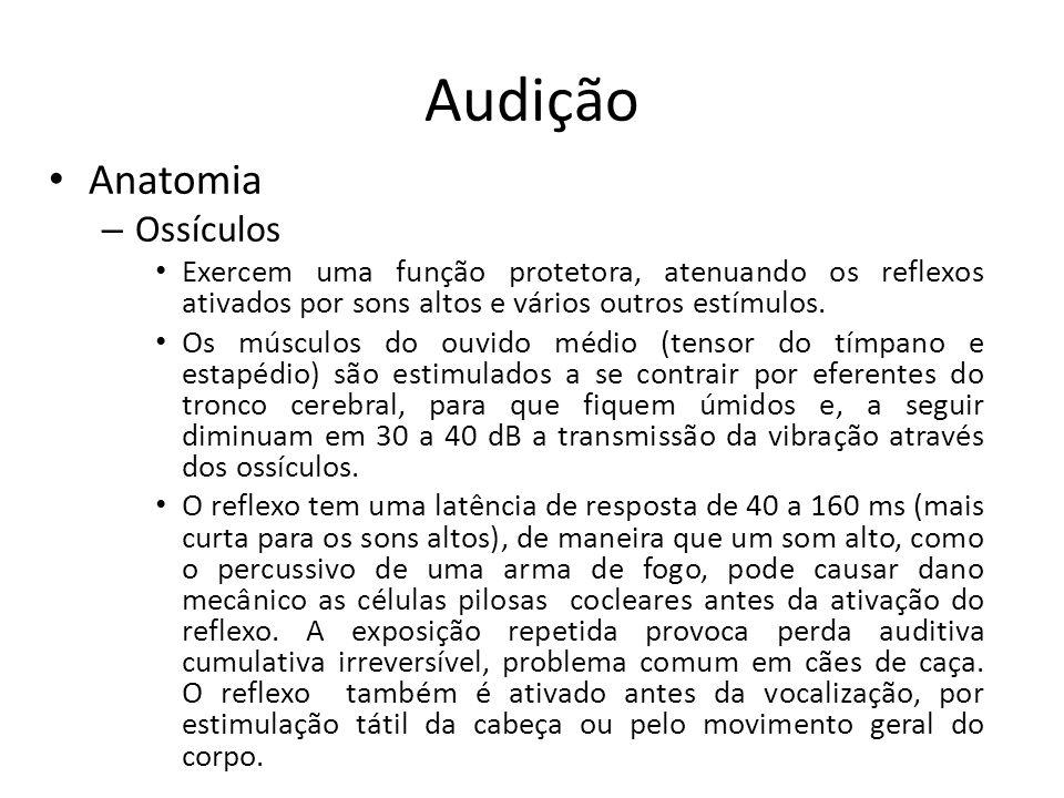 Audição Anatomia Ossículos