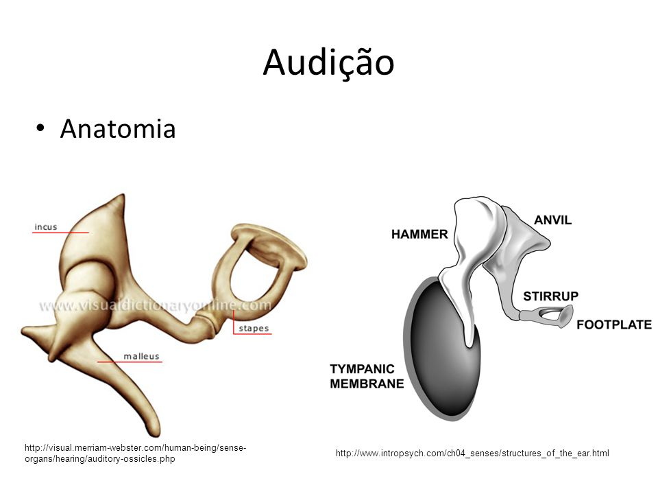 Audição Anatomia. http://visual.merriam-webster.com/human-being/sense-organs/hearing/auditory-ossicles.php.