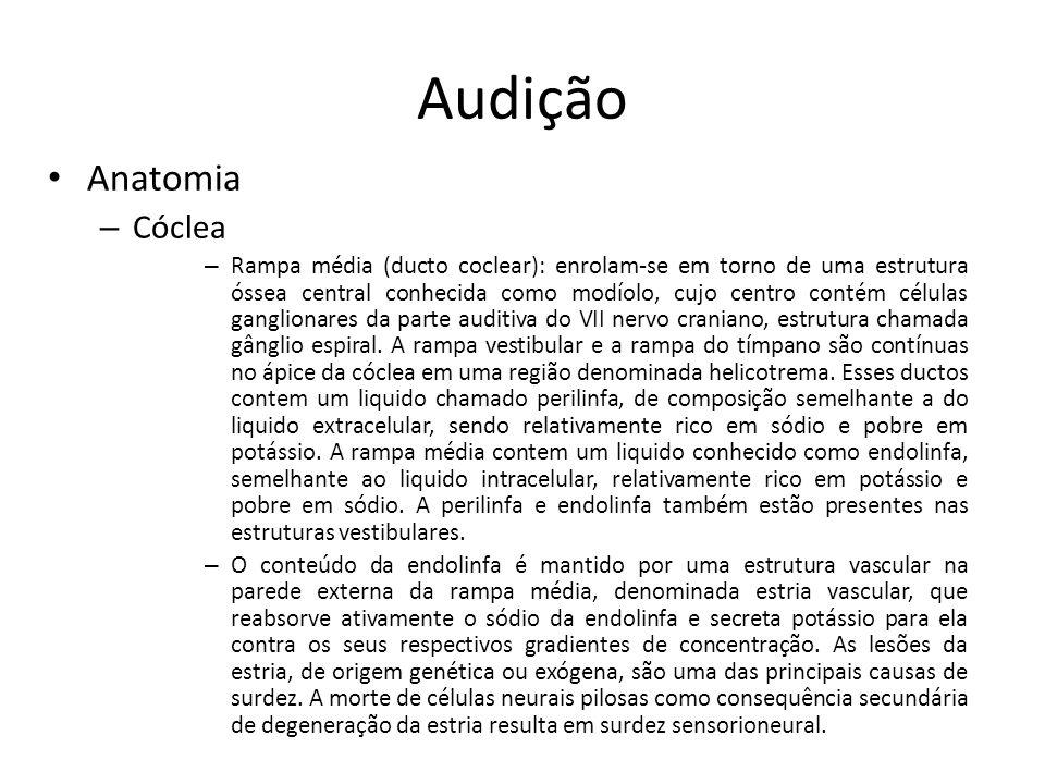 Audição Anatomia Cóclea