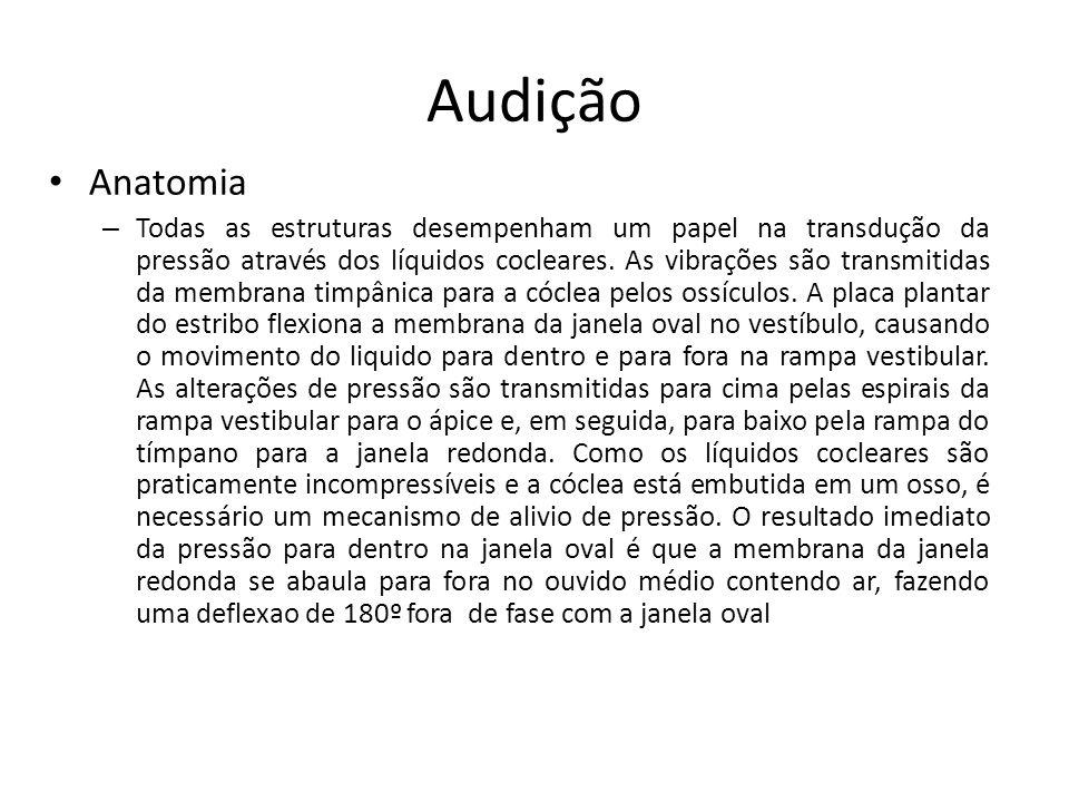 Audição Anatomia.