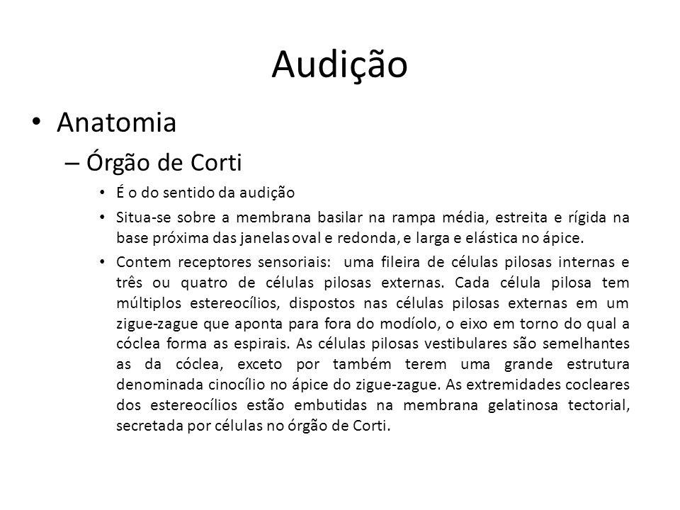 Audição Anatomia Órgão de Corti É o do sentido da audição