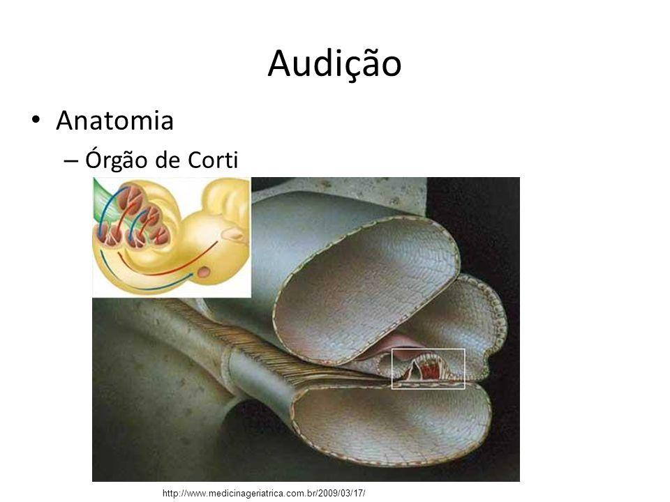 Audição Anatomia Órgão de Corti