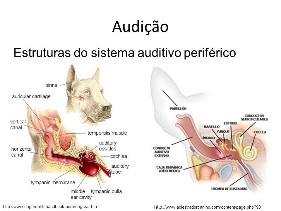 Estruturas do sistema auditivo periférico