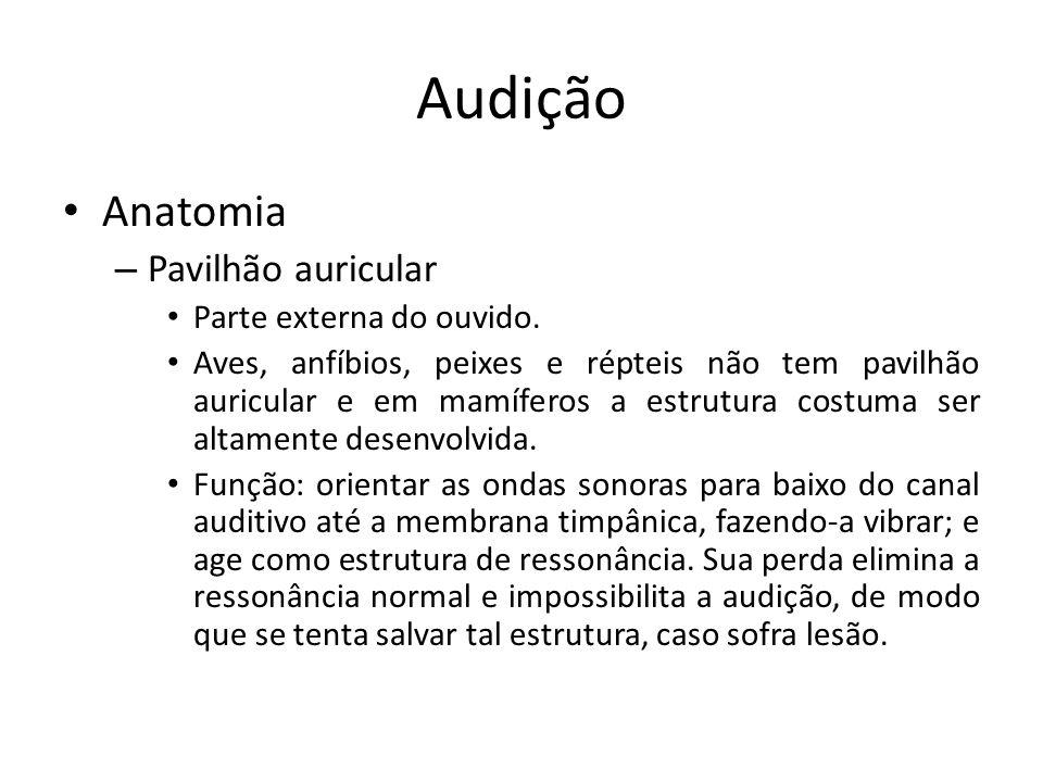 Audição Anatomia Pavilhão auricular Parte externa do ouvido.