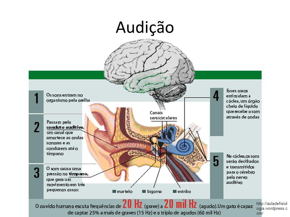 Audição http://auladefisiologia.wordpress.com/