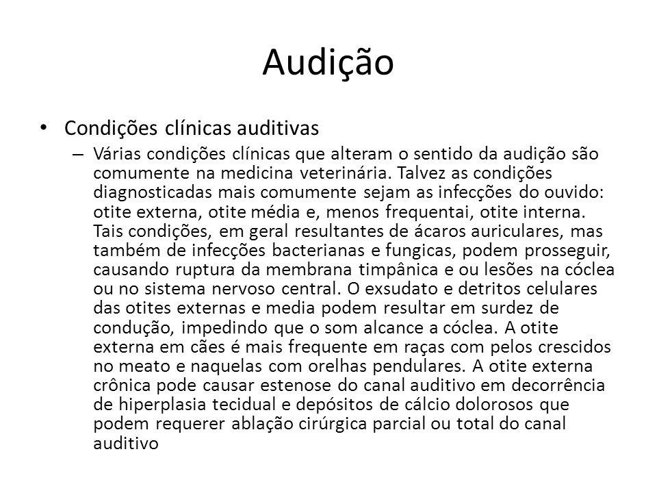 Audição Condições clínicas auditivas