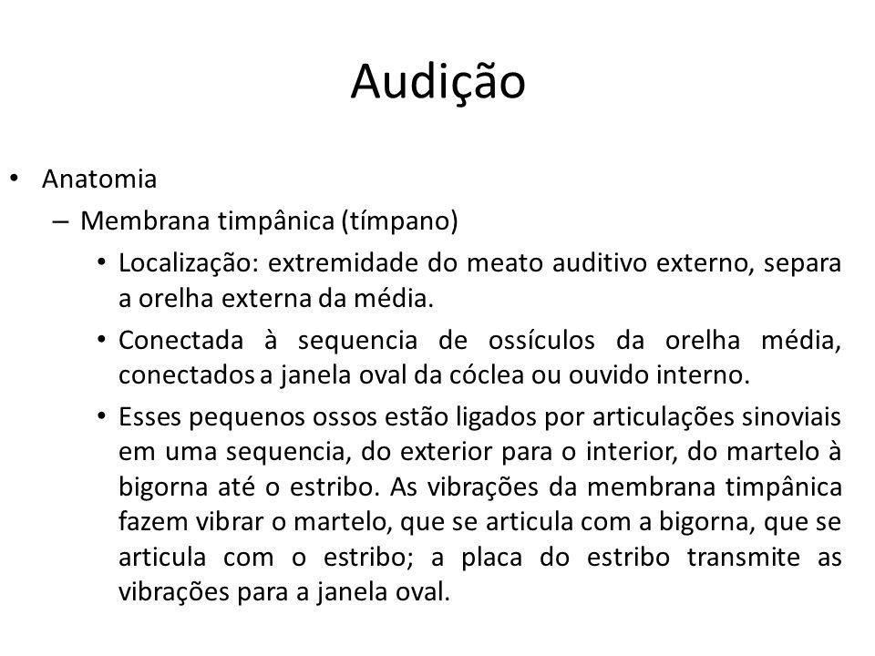 Audição Anatomia Membrana timpânica (tímpano)