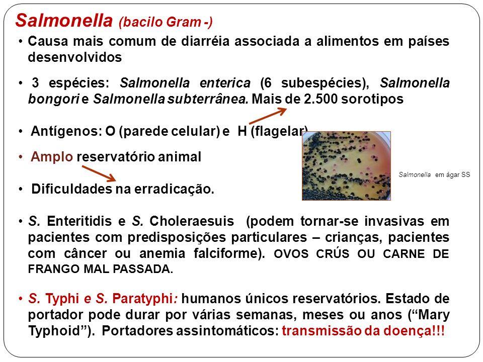 Salmonella (bacilo Gram -)
