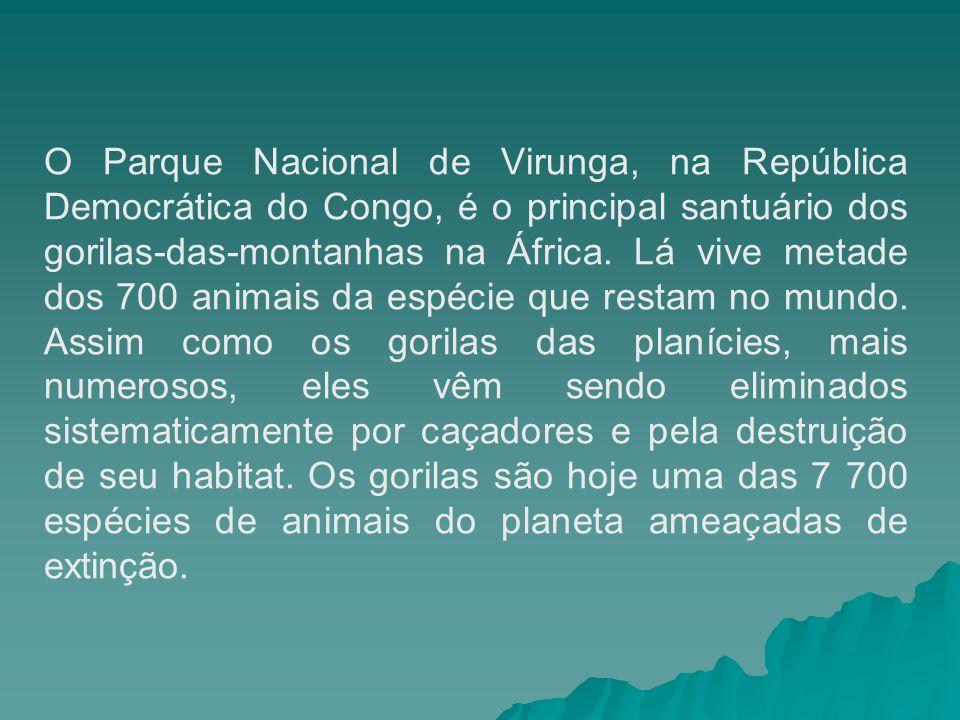 O Parque Nacional de Virunga, na República Democrática do Congo, é o principal santuário dos gorilas-das-montanhas na África.
