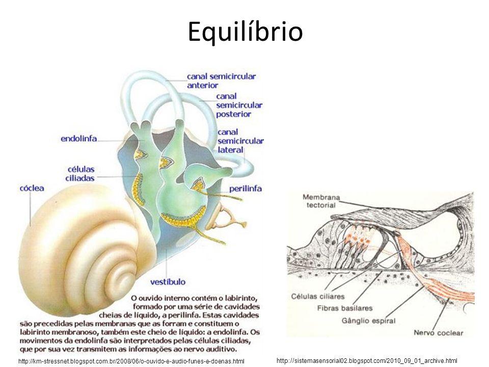 Equilíbriohttp://km-stressnet.blogspot.com.br/2008/06/o-ouvido-e-audio-funes-e-doenas.html.