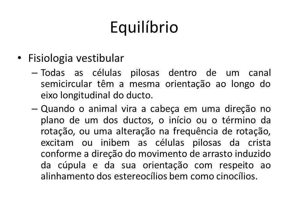 Equilíbrio Fisiologia vestibular