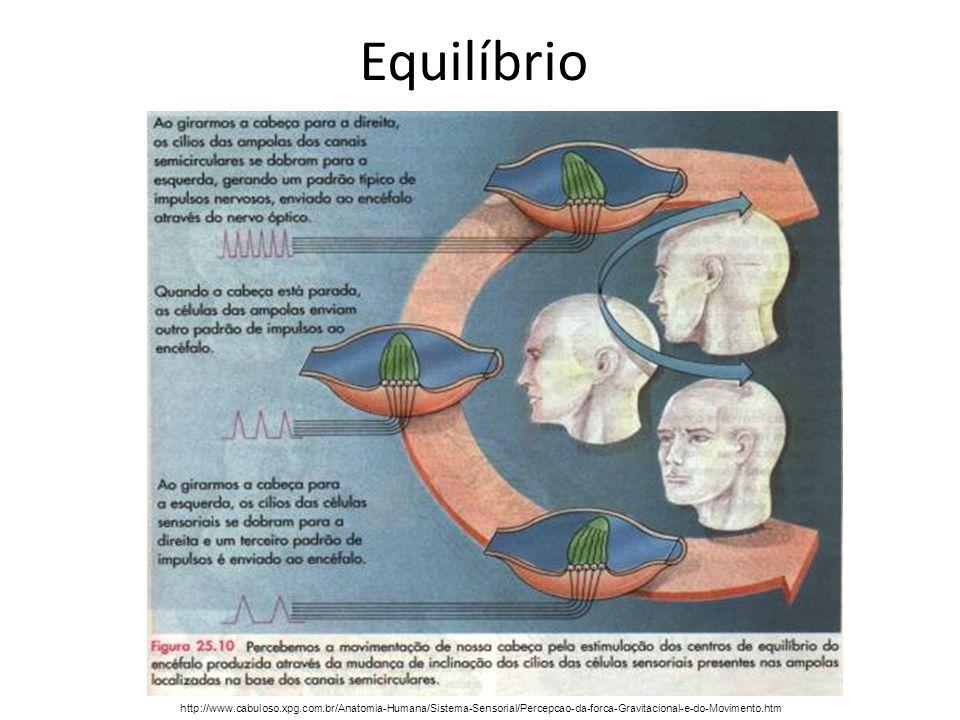 Equilíbriohttp://www.cabuloso.xpg.com.br/Anatomia-Humana/Sistema-Sensorial/Percepcao-da-forca-Gravitacional-e-do-Movimento.htm.