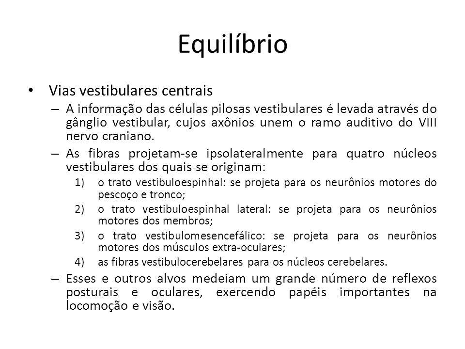 Equilíbrio Vias vestibulares centrais