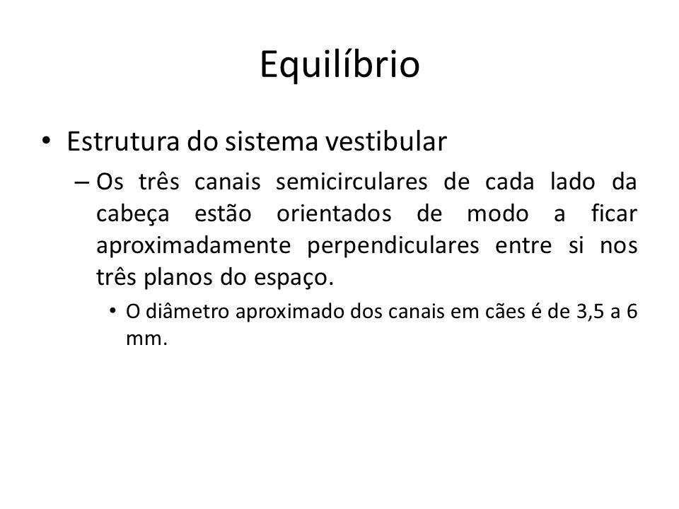 Equilíbrio Estrutura do sistema vestibular