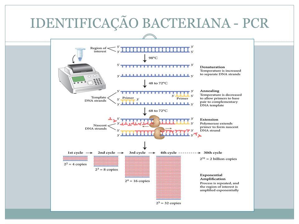 IDENTIFICAÇÃO BACTERIANA - PCR