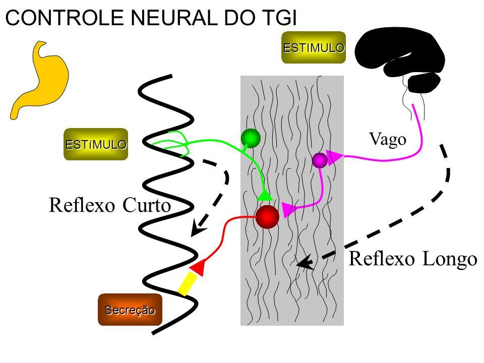 CONTROLE NEURAL DO TGI Reflexo Curto Reflexo Longo Vago ESTIMULO