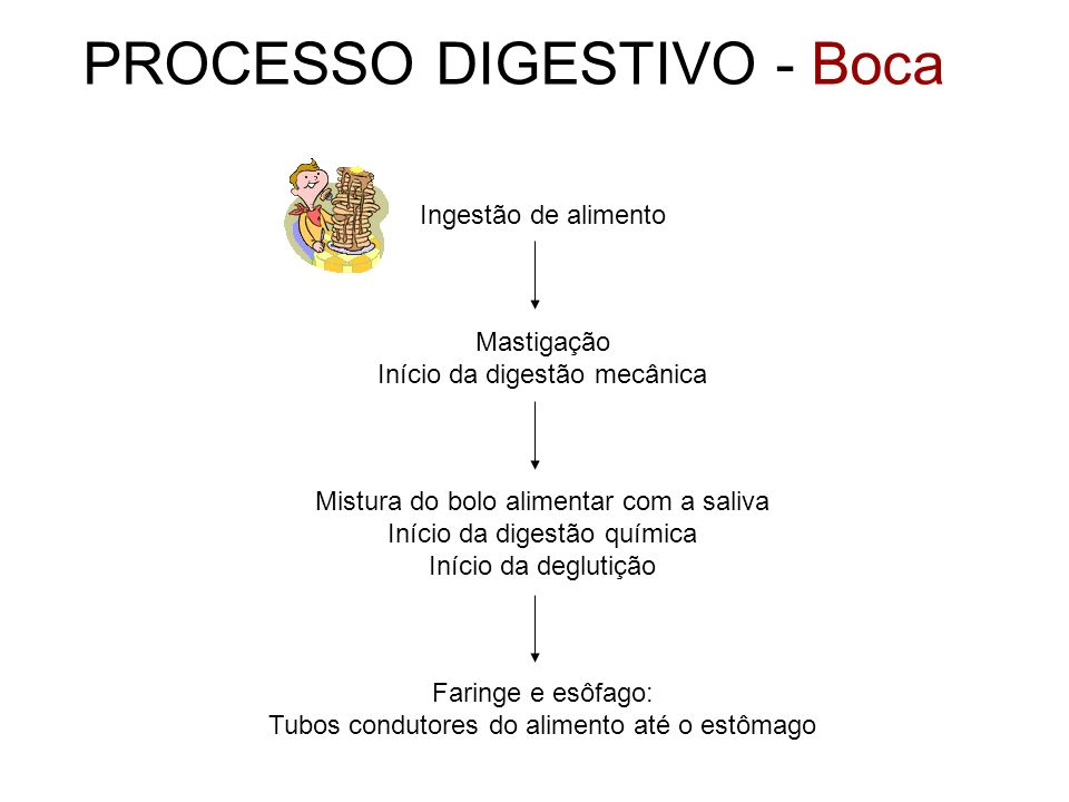 PROCESSO DIGESTIVO - Boca