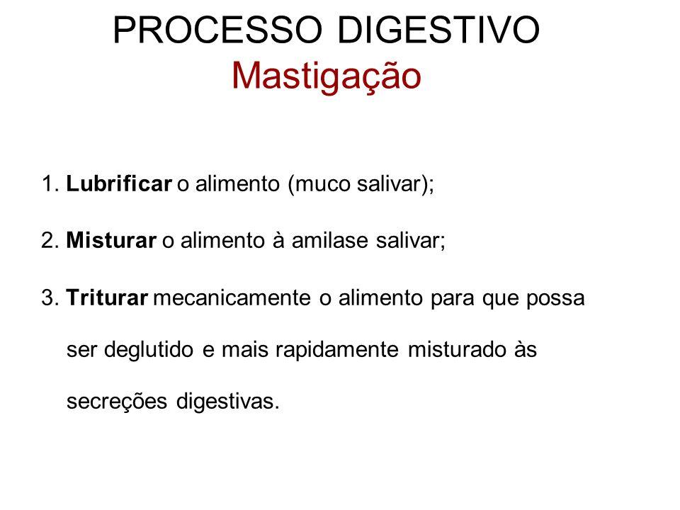 PROCESSO DIGESTIVO Mastigação