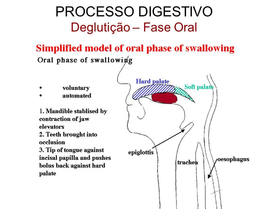 PROCESSO DIGESTIVO Deglutição – Fase Oral