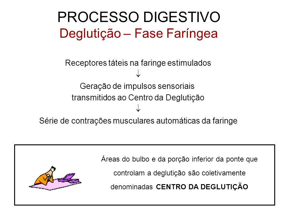 PROCESSO DIGESTIVO Deglutição – Fase Faríngea