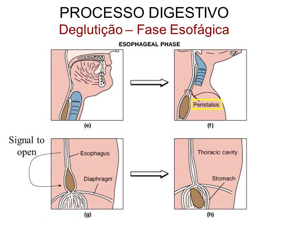 Deglutição – Fase Esofágica