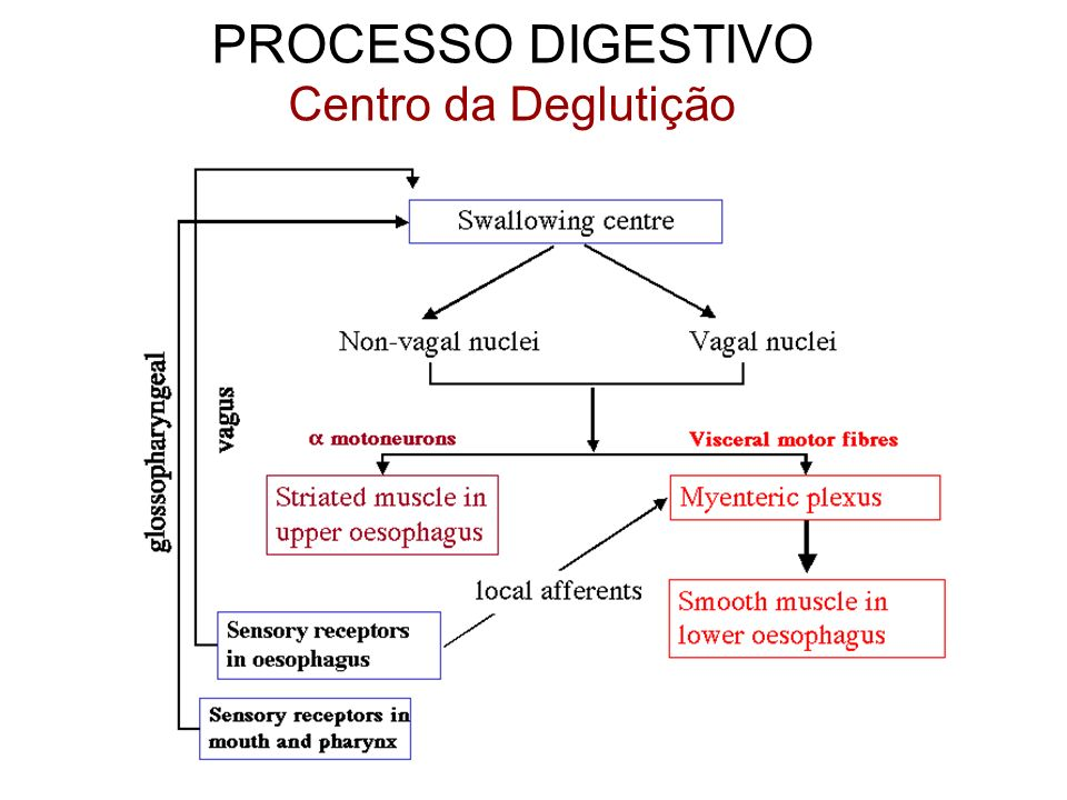 PROCESSO DIGESTIVO Centro da Deglutição