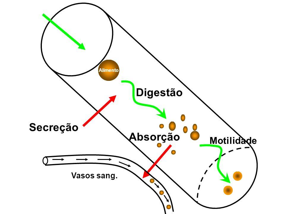 Alimento Digestão Secreção Absorção Motilidade Vasos sang.