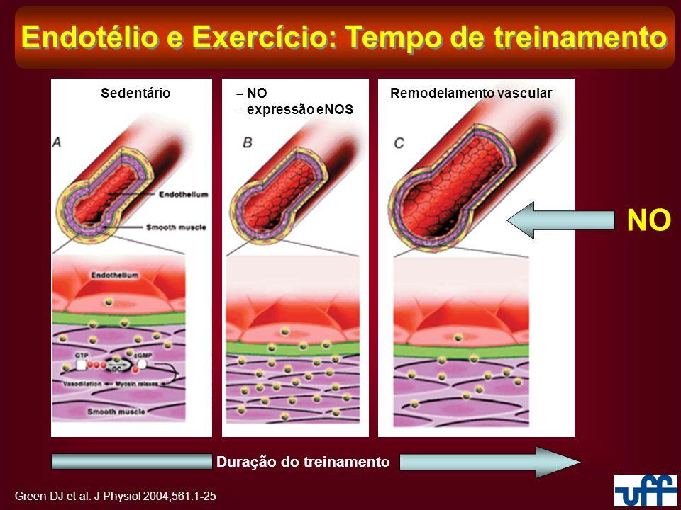 Endotélio e Exercício: Tempo de treinamento