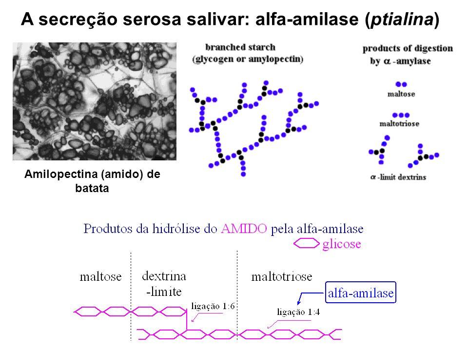 A secreção serosa salivar: alfa-amilase (ptialina)