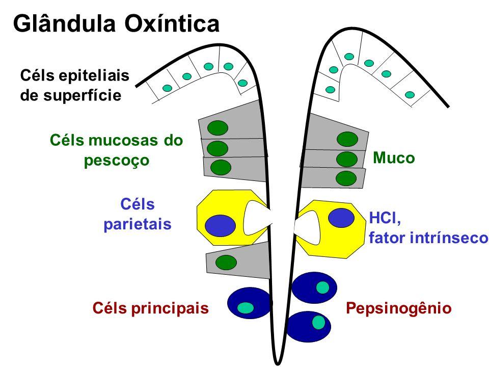 Céls mucosas do pescoço