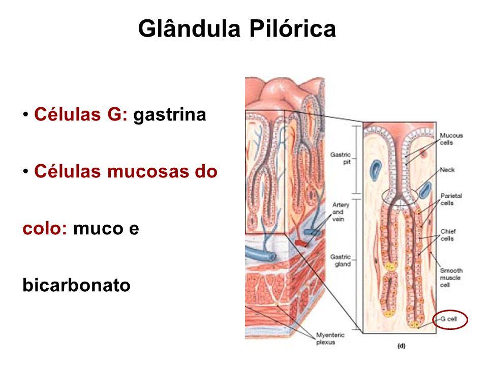 Glândula Pilórica Células G: gastrina