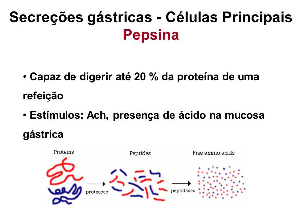 Secreções gástricas - Células Principais Pepsina