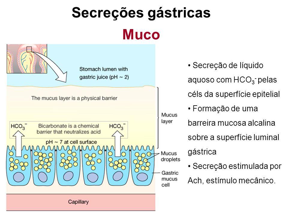 Secreções gástricas Muco