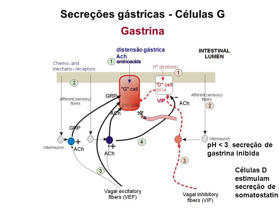 Secreções gástricas - Células G