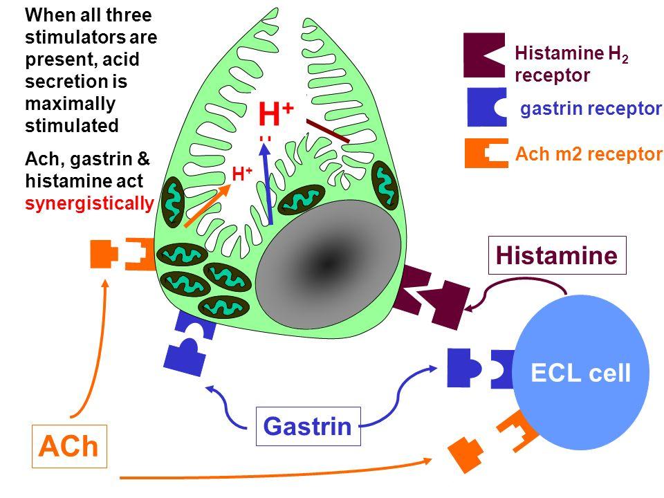 H+ ACh Histamine ECL cell Gastrin