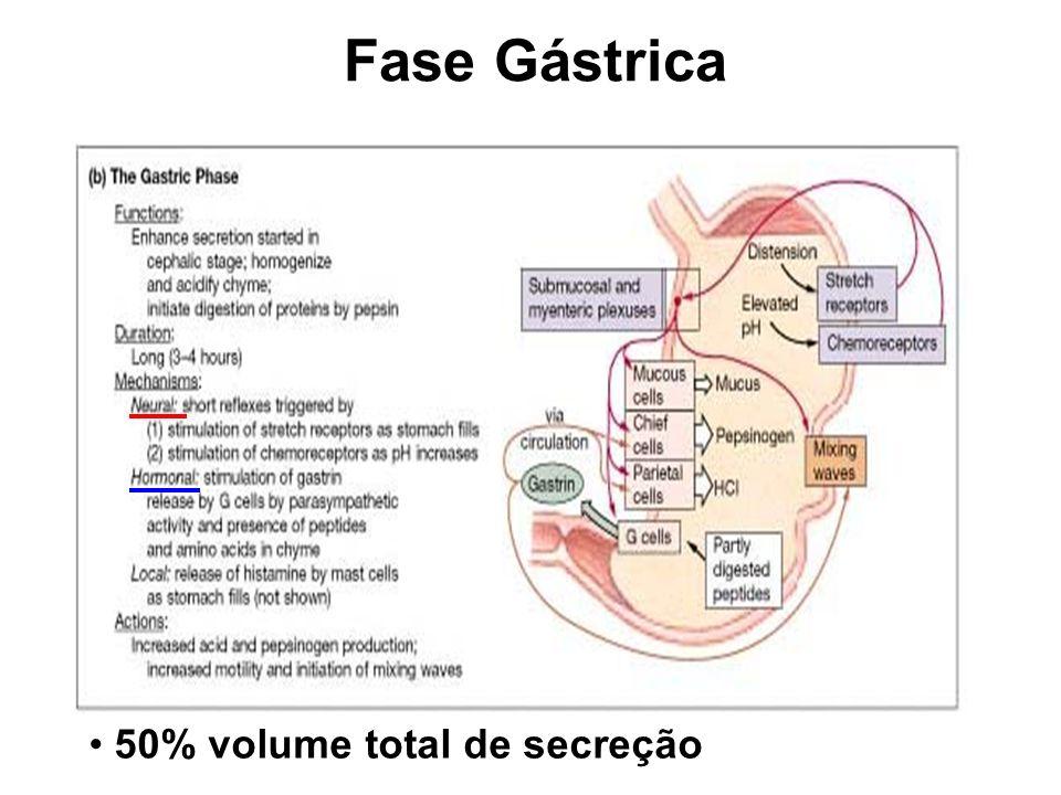 Fase Gástrica 50% volume total de secreção