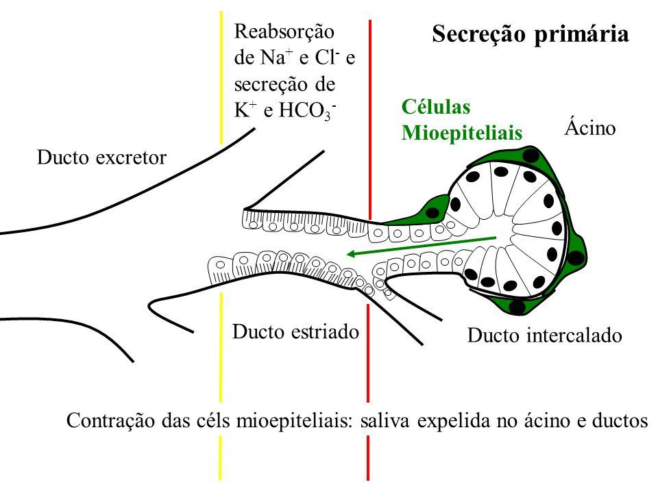 Secreção primária Reabsorção de Na+ e Cl- e secreção de K+ e HCO3-