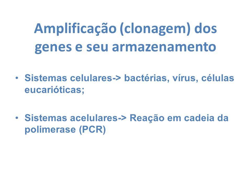 Amplificação (clonagem) dos genes e seu armazenamento