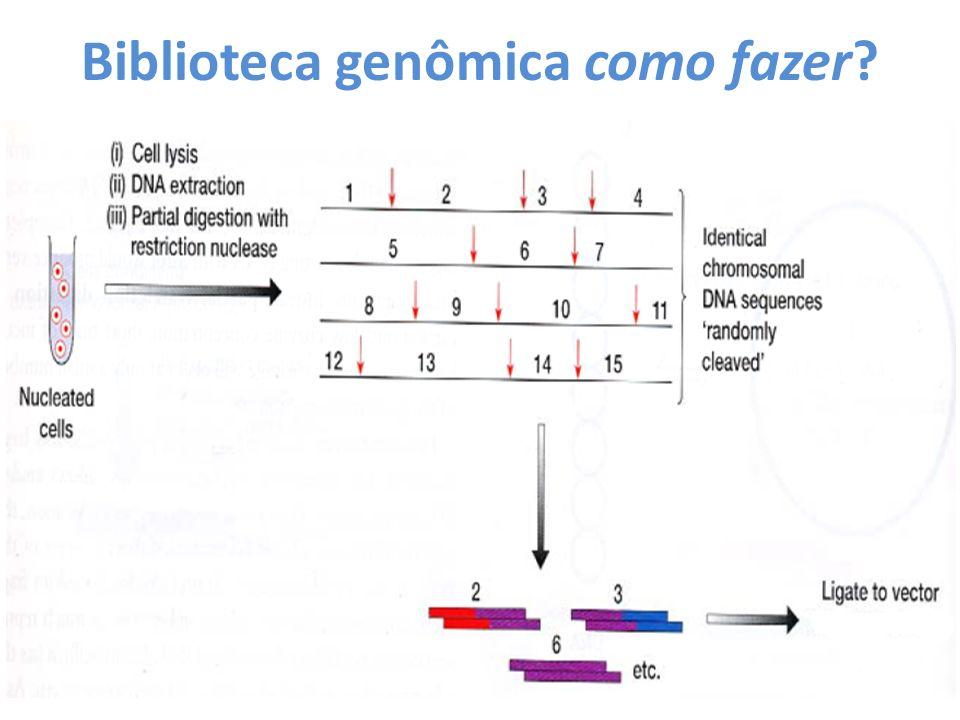 Biblioteca genômica como fazer